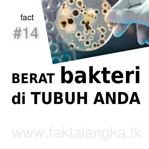berat bakteri tubuh manusia