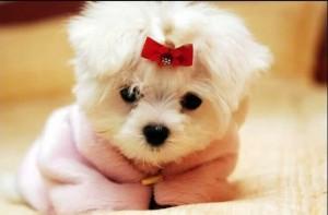 cães - micro