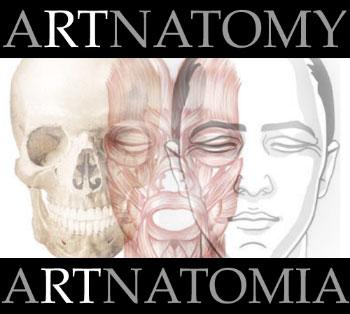 Artnatomia