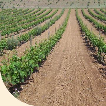 Fotosintesis en el area de pastos y leguminosas formas de for Informacion sobre el suelo