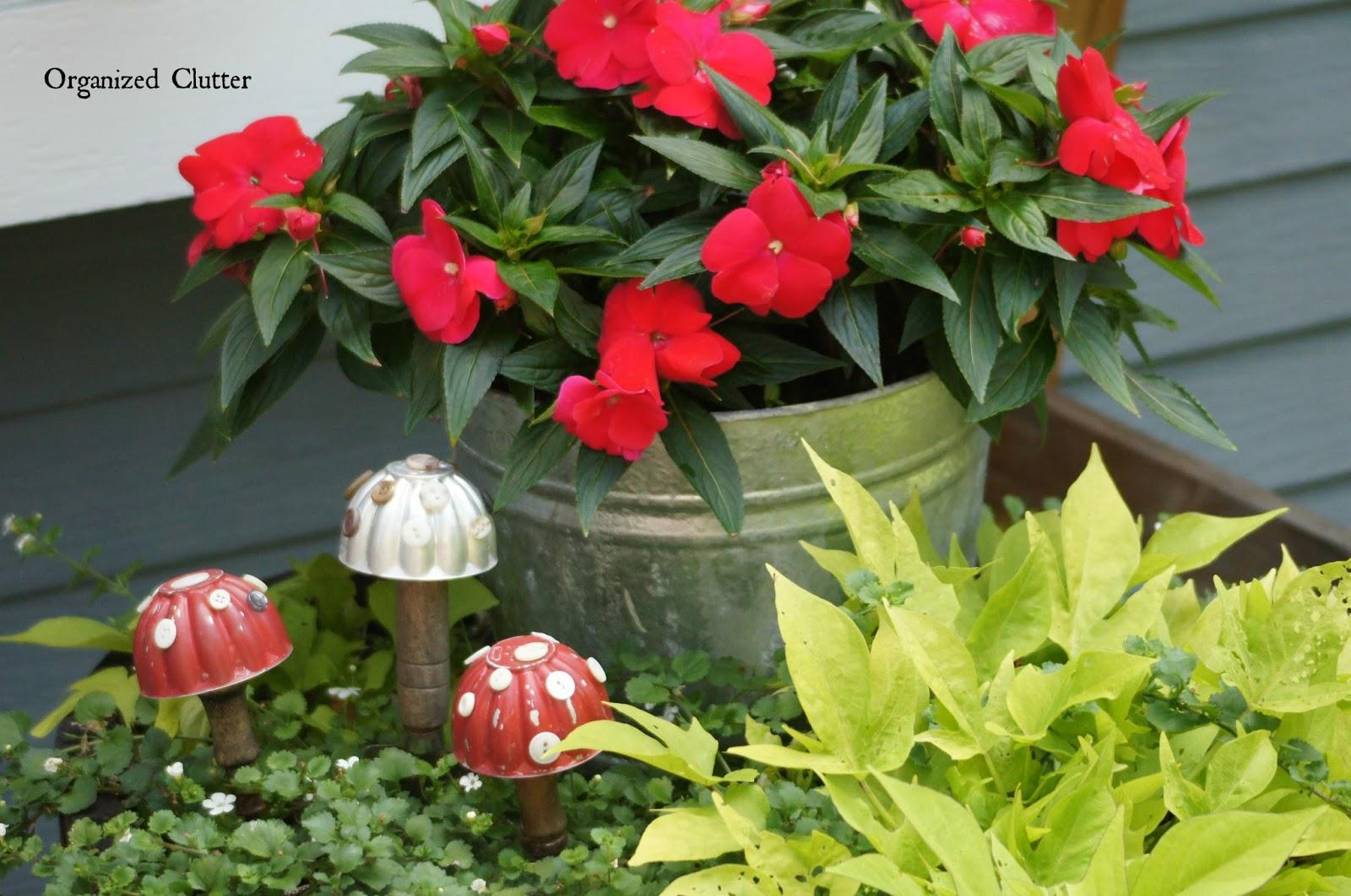 Sun Patiens and Jello Mold Toadstools www.organizedclutterqueen.blogspot.com