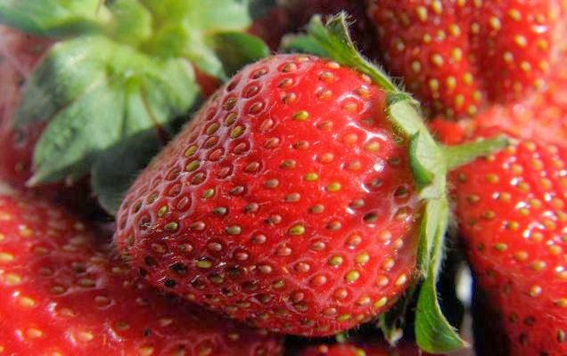 Strawberry in munnar, where to by strawberry in munnar, strawberry unit in munnar, strawberry factory in munnar, strawberry outlets in munnar, munnar strawberry plantations, strawberry plantations in munnar, strawberry cultivation in munnar