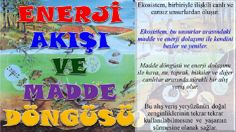 Enerji Ak��� Ve Madde D�ng�s� - SUNU | Feyzullah Demir
