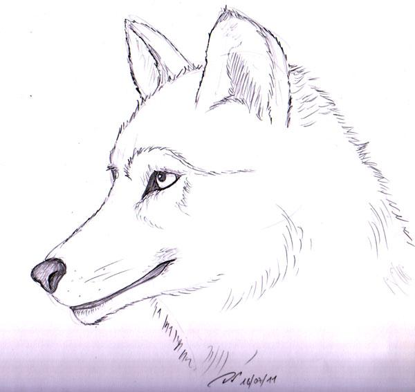 Elfyne in wonderland juillet 2011 - Dessin loup facile ...