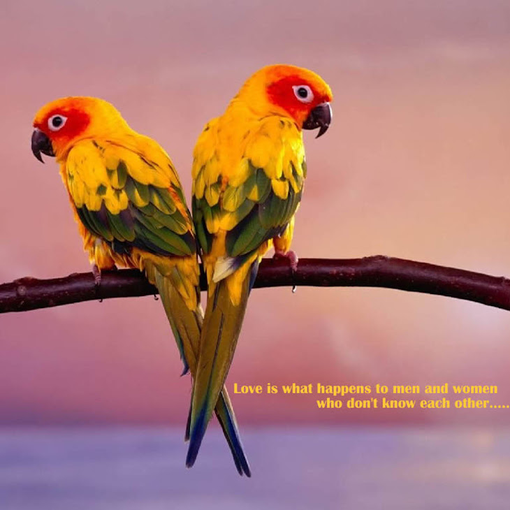 HD Love Birds Pictures