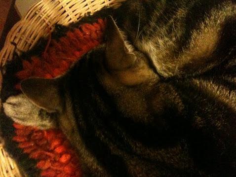 Sleeping....