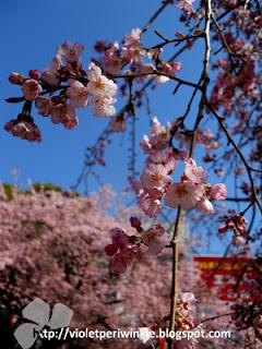Tokyo Spring March 2014