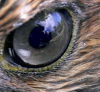 Visión aves