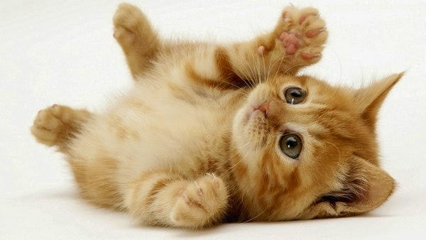 kucing lucu dan menggemaskan