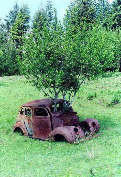 Tumbuhan di mobil