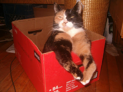 Cat smiling in a box