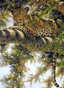 tigres ,panteras y animales salvajes