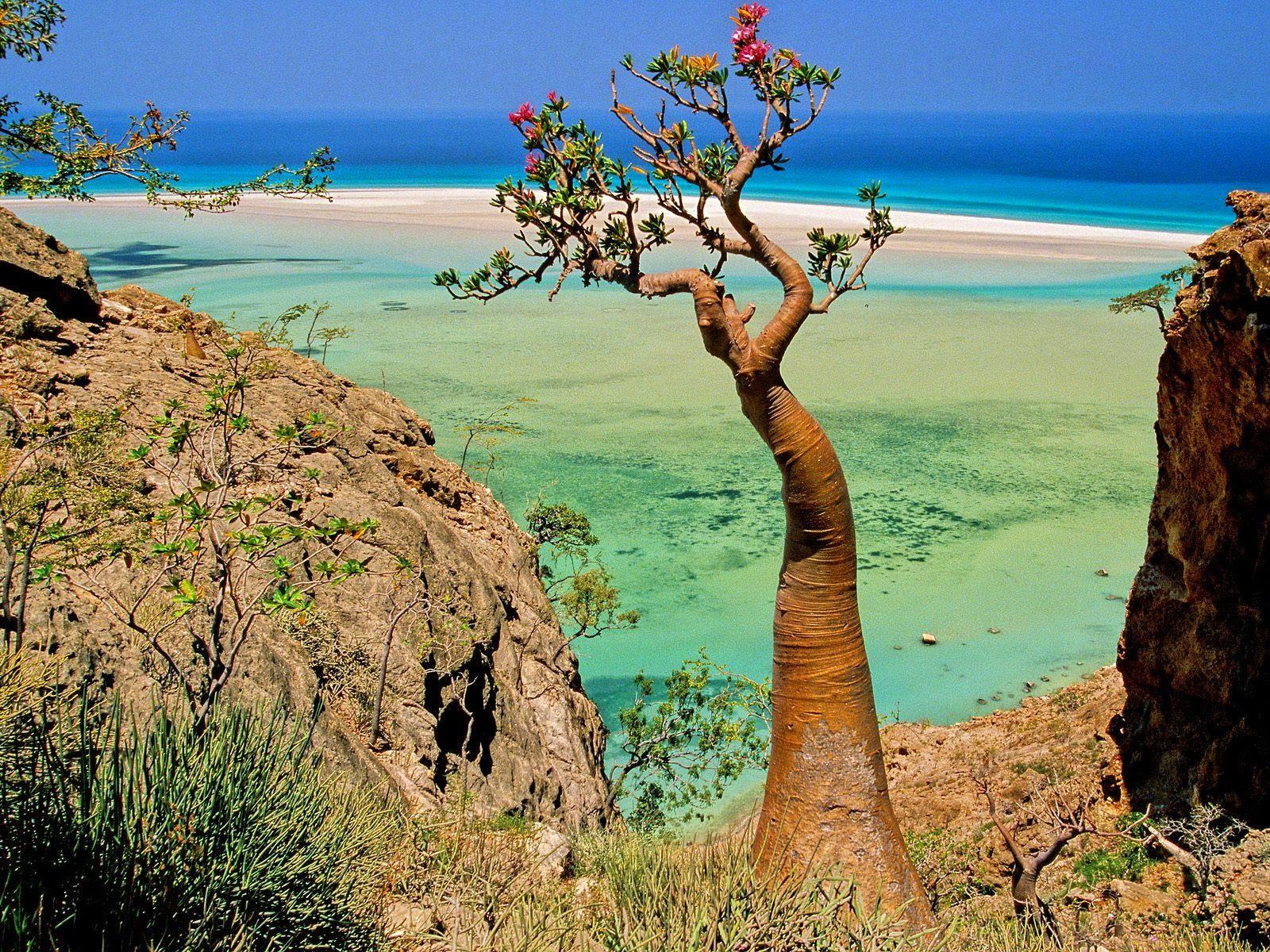 socotra+island+pulau+dajjal billyinfo1 Keanehan Pulau Socotra di Yemen, pulau Dimana DAJJAL Dirantai?