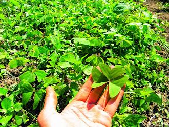 Vamos comer plantas selvagens?