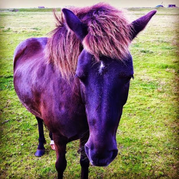 horses in gardur