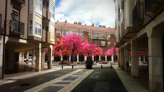 Primavera urbana, 2013 Abbé Nozal
