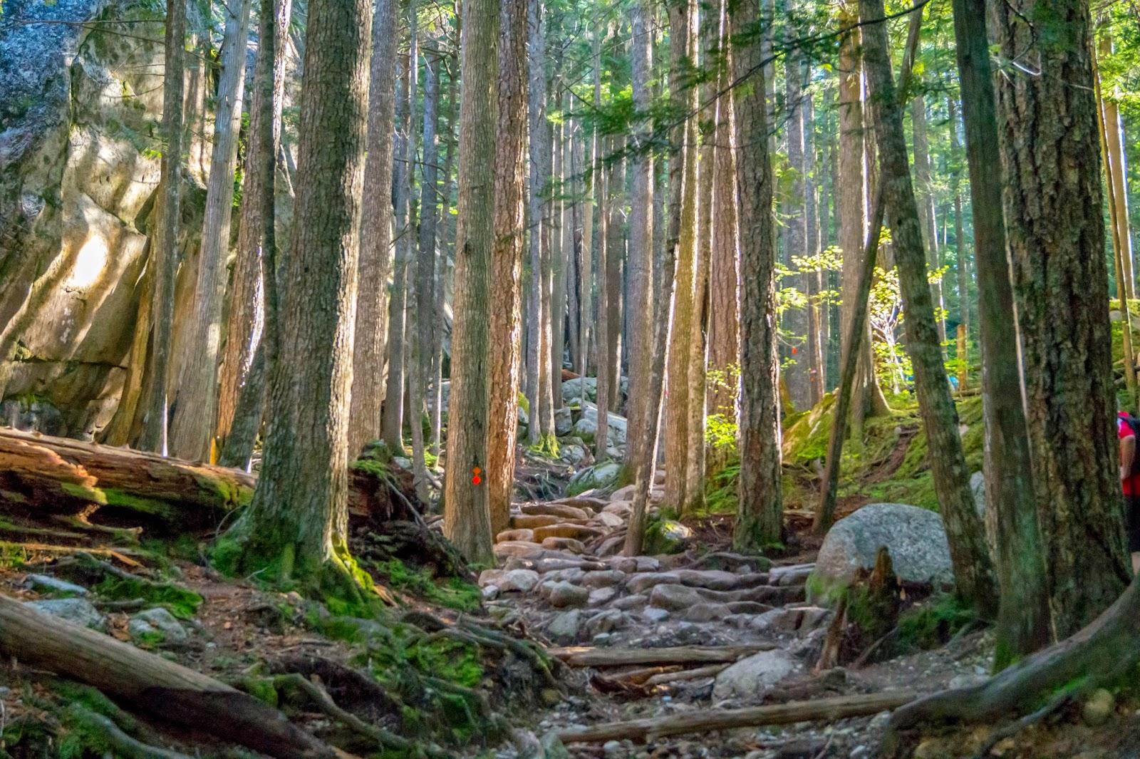 К середине пути лучи утреннего солнца добрались до нашей тропы, окрасив горный лес в яркие цвета.