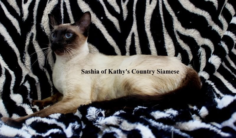 Sashia  retired and needs a home.