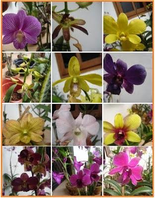 budidaya tanaman hias, budi daya tanaman hias, cara budidaya tanaman hias, pengertian budidaya tanaman hias, artikel tentang budidaya tanaman hias