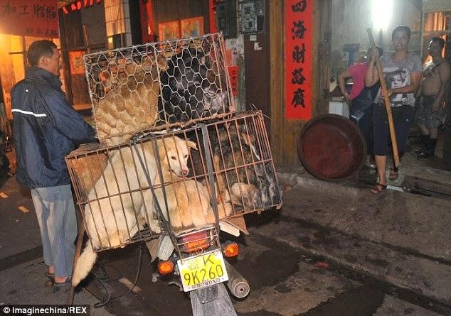 perros a la espera de ser sacrificados en China
