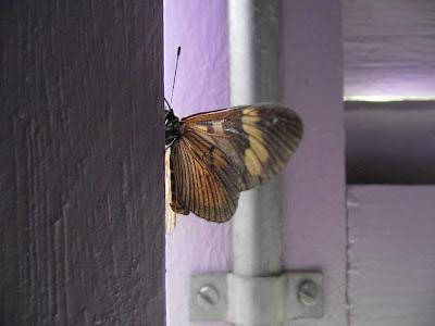 borboleta em uma janela lilás