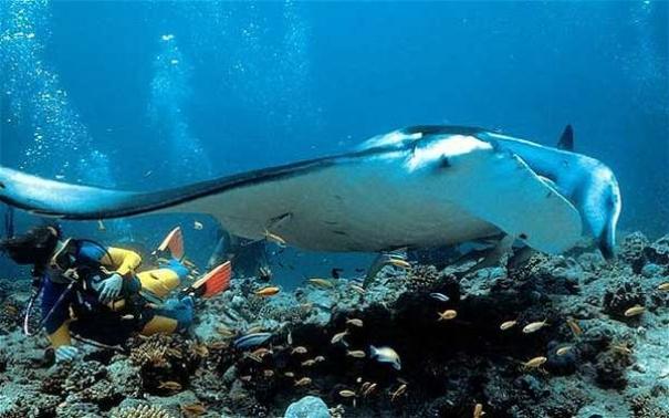 Aktivitas Wisata Dan Cara Menuju Pulau Derawan