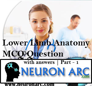 Lower Limb Anatomy MCQ Question with answers | Part – 1