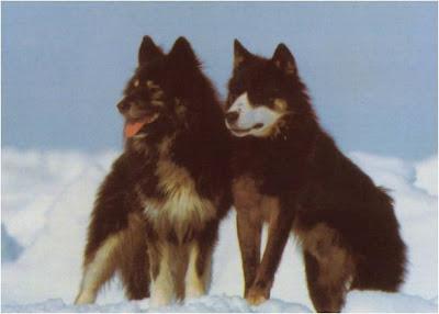 Imágen de dos perros Husky