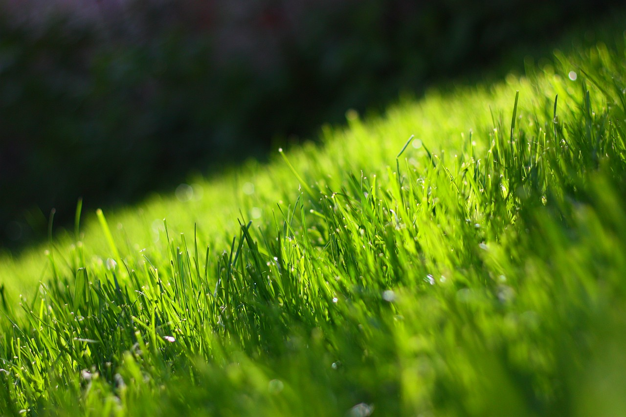 is beautiful grasses - photo #21