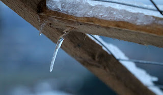 A small icicle hanging from Sassy's cage