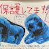 沖縄県【保護しています】   犬・トイプードル&シーズーのMIX?