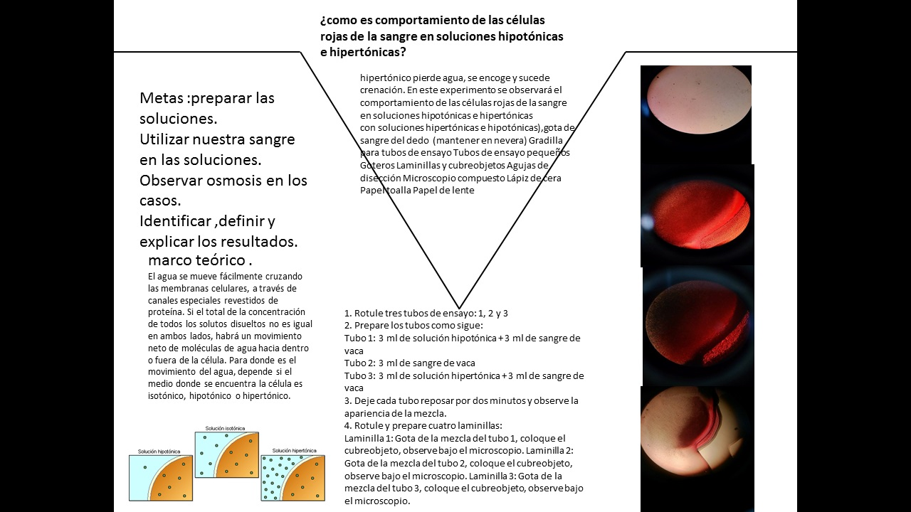 Jhoan Daniel Garnica Duran informes laboratorio: informe de ...