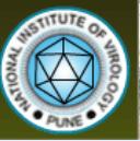 National Institute of Virology Recruitment 2015 MTS, Asst, Technician, LDC – 32 Posts