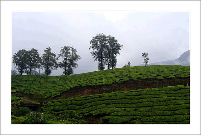 visit munnar with us . best tour deal on phone. just fill contact form