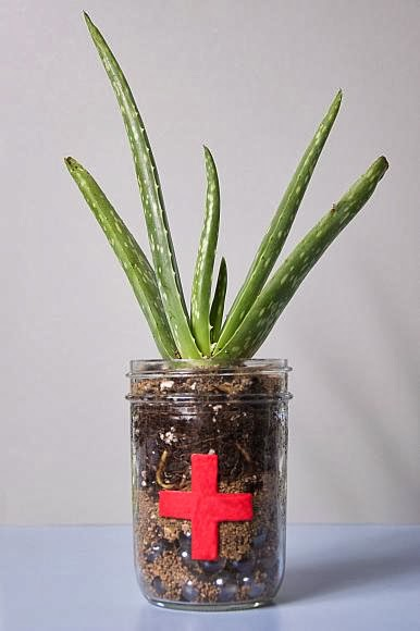 http://www.decoart.com/blog/project/41/diy_succulent_vase