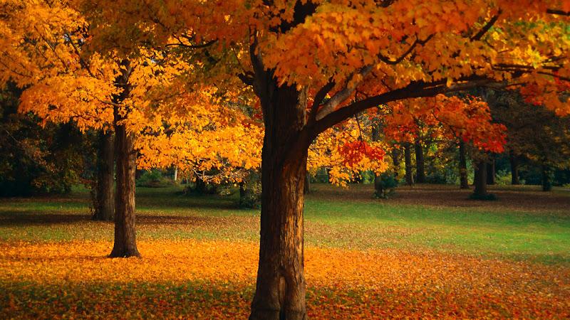 Gayet güzel bir sonbahar yaprak dökümü hd kalitesinde resim