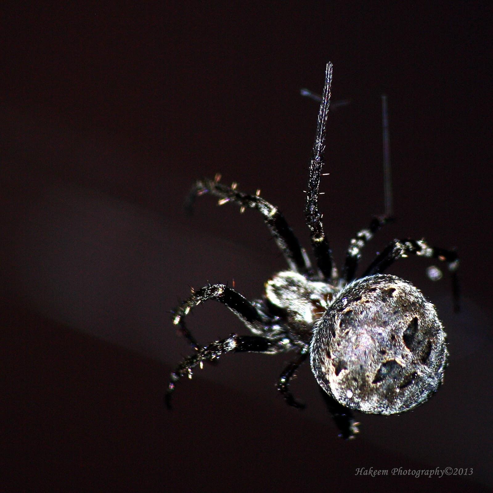 House Spider 4