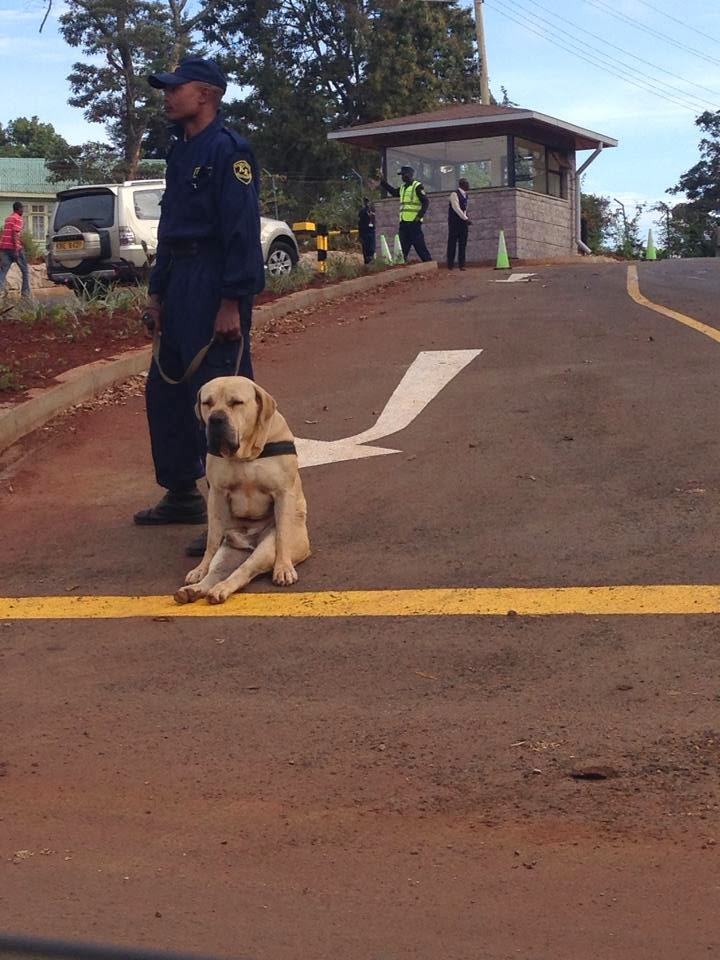 Lazy Security Dog