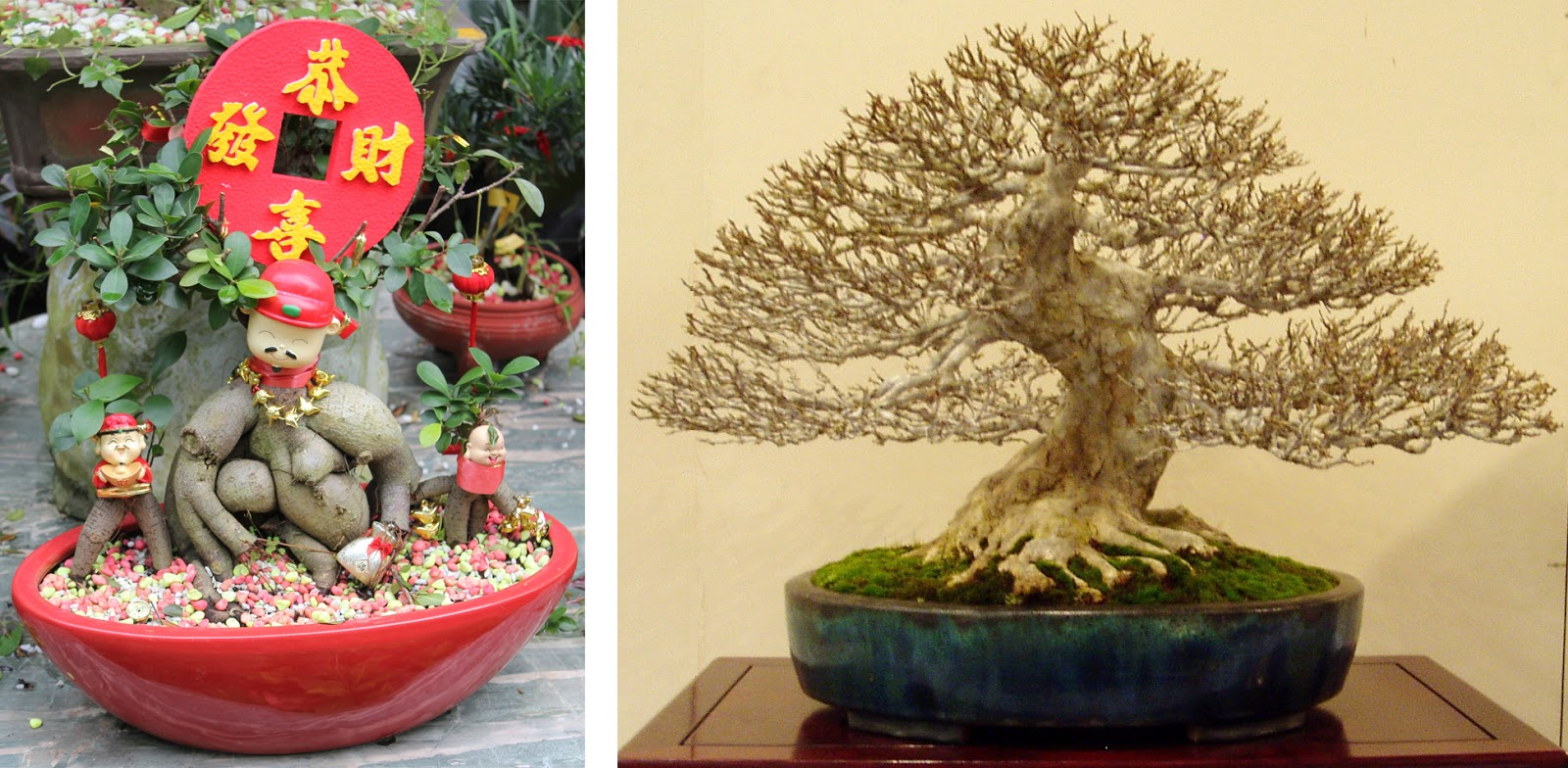 Kigawa39s Bonsai Blog May 2015