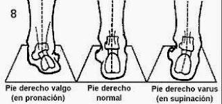 Movimientos de la subastragalina (astrágalo y calcáneo)