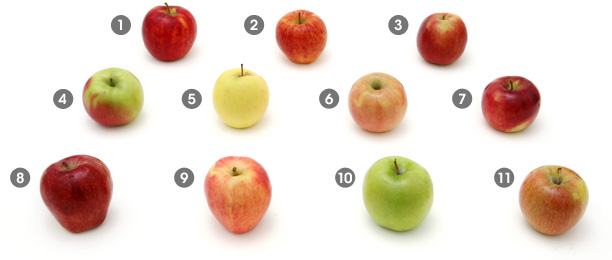 Mihachu`: a visual guide to apples