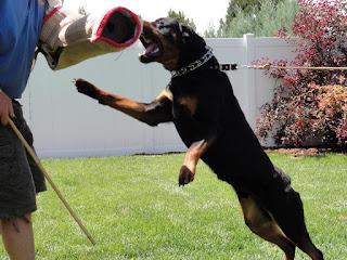 Ảnh huấn luyện chó