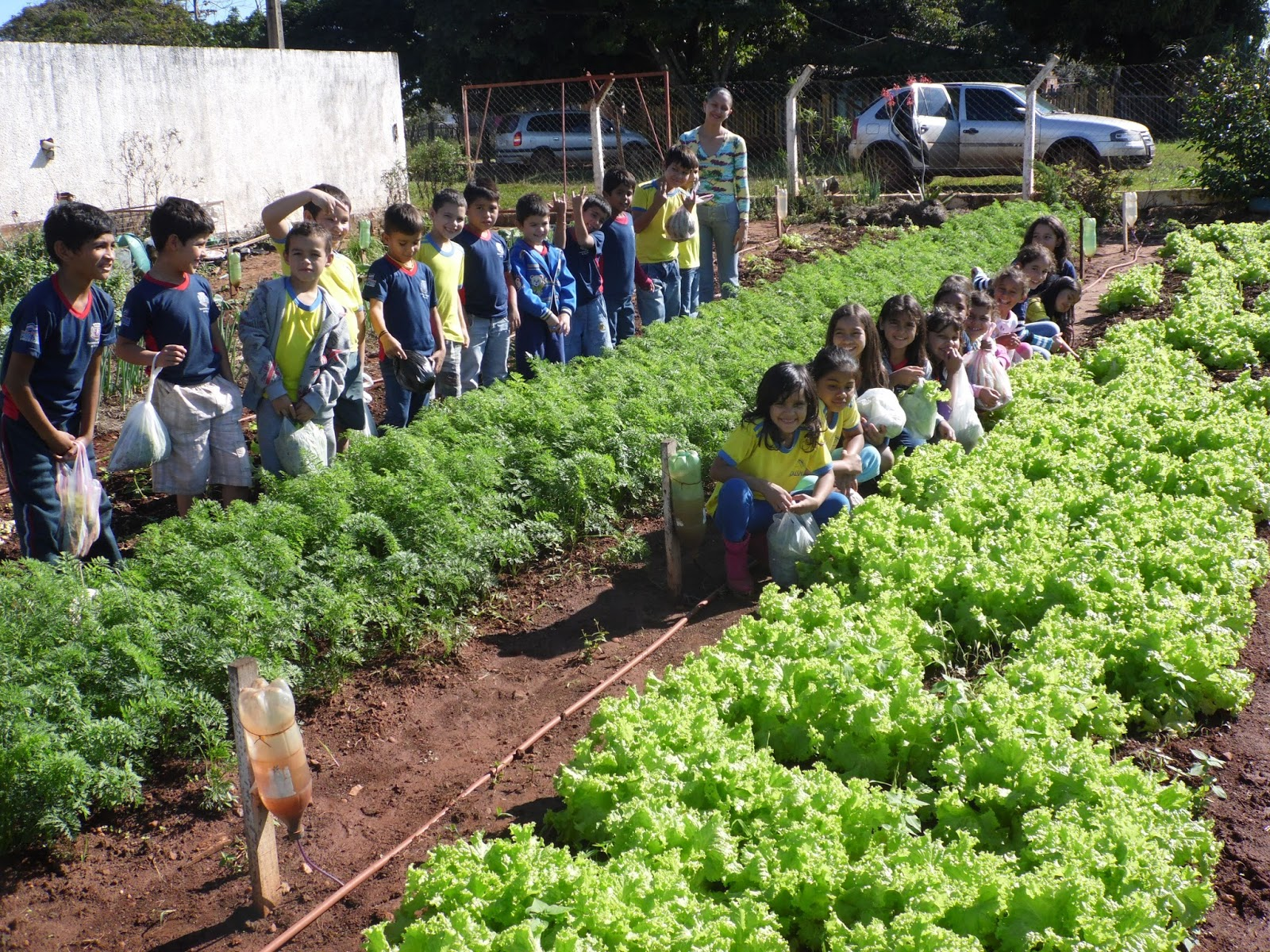 projeto horta e jardim na escola reciclado envolver a comunidade