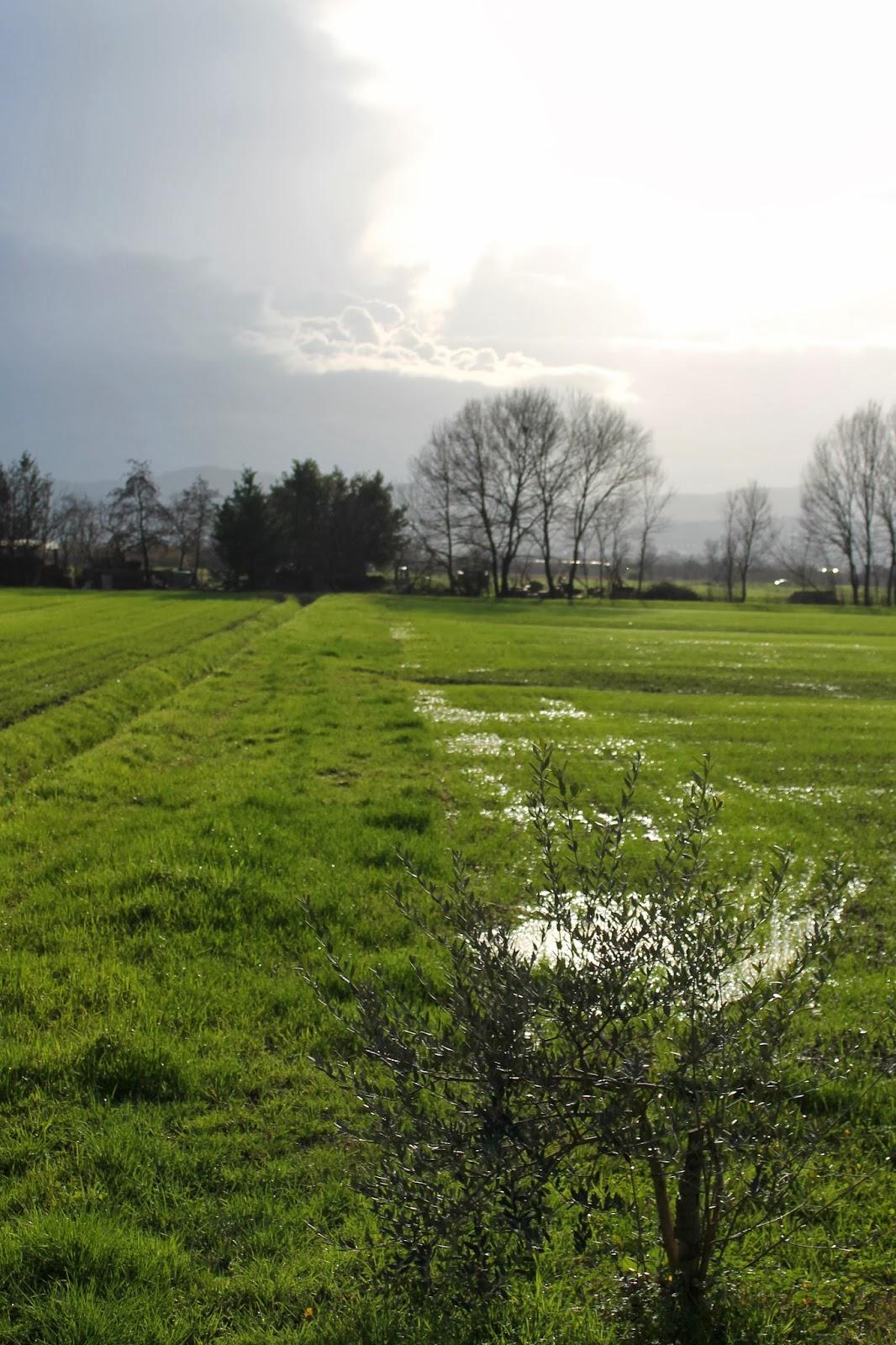 campo allagato