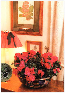 В гостиной вам, возможно, захочется поместить прекрасное растение, как эта азалия, в не менее красивое кашпо