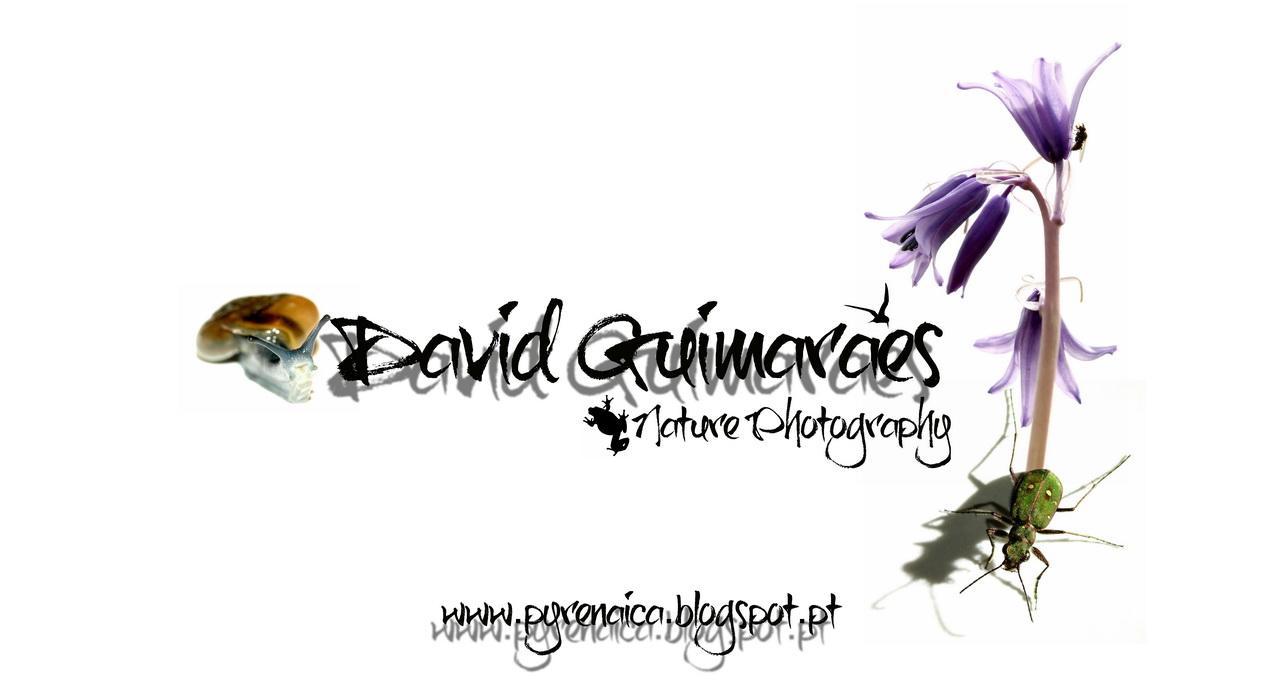 David Guimaraes