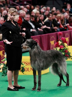Watch Westminster Dog Show Online Free