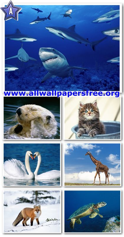 60 Amazing Animals Wallpapers 1280 X 1024 [Set 10]
