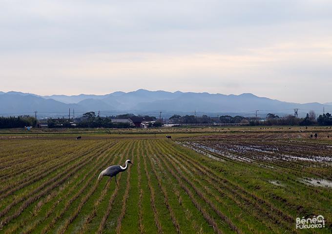 Izumi Crane Center, Izumi, Kagoshima