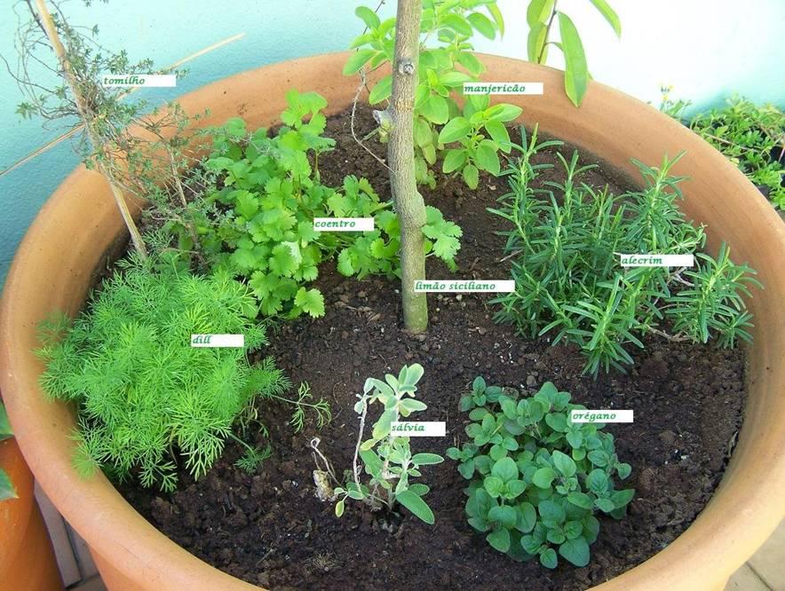 mini jardim de temperos : mini jardim de temperos:Cultive uma horta orgânica em casa